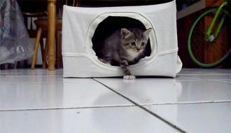 cara membuat rumah kucing
