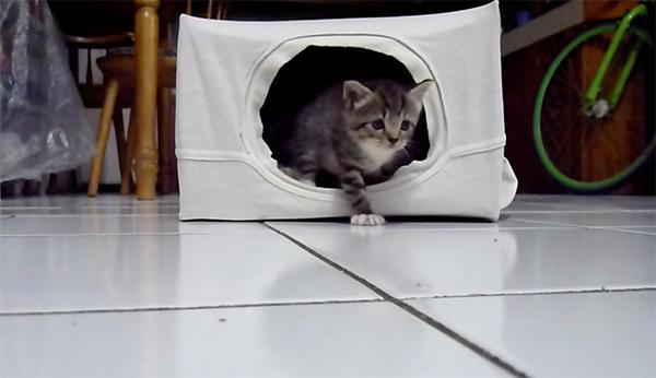 Unduh 96+  Gambar Kucing Rumah Paling Baru Gratis
